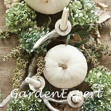 8pcs Weiß Kürbiskerne Mondenschein Kürbis Glatte Enthäutete Seltene Kürbis Ornament Pflanze für Carving-Hausgarten Bonsai Samen