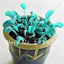 9: 100 Stücke Blau Insektenfressende Pflanze