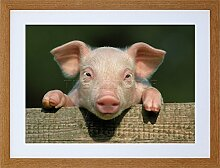 9x7 '' PHOTO ANIMAL PIG PIGLET CUTE FARM PINK BABY BABE FRAMED ART PRINT F97X804