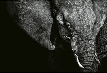 A.s.creations - DD118920 Beautiful Elephant