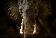 A.s.creations - DD118922 Elephant Ivory