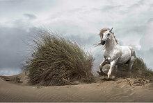 A.s.creations - DD118925 White Wild Horse