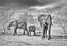 A.s.creations - DD118931 Elephant Family