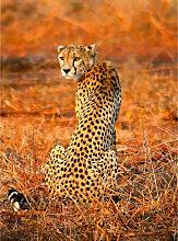 A.s.creations - DD119074 Leopard Safari