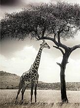 A.s.creations - DD119075 Giraffe Safari