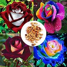 Acecoree Samen- 10/20/50 Stück Bunt Rosen Samen