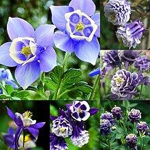 Acecoree Samenhaus- 50Pcs Blumen Samen- Akelei
