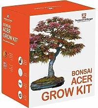 Acer Bonsai Pflanze Samen Wachstums Set Bauen Sie