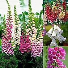 AchidistviQ 500Pcs Fingerhut Blumensamen