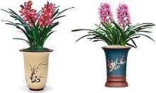 AchidistviQ Orchideensamen Garten Staude Blühende