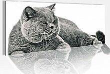 Acrylglasbild 100x40cm Katze mürrisch grau Kater Tier Acrylbild Acryl Druck Acrylglas Acrylglasbilder 14A8662, Acrylglas Größe1:100cmx40cm