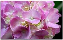 Acrylglasbilder 80x50cm Blume Hortensie rosa pink