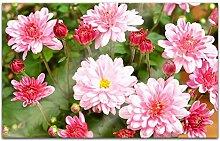 Acrylglasbilder 80x50cm Blumen Chrysantheme rosa