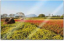 Acrylglasbilder 80x50cm Feld Wiese Blumen Gras