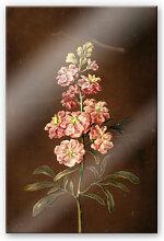 Acrylglasbilder - Acrylglasbild Dietzsch - Eine rosa Garten Levkkoje