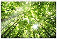Acrylglasbilder - Acrylglasbild Sunny Forest 2