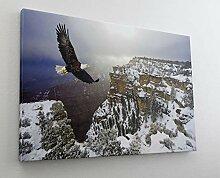Adler Gebirge Schnee Steinadler Leinwand Bild