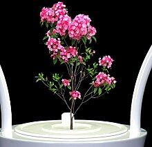 Aero GardenHarvest und Gourmet Kräuter Samen Pod Kits intelligente Töpfe automatische Pflanze wachsende Maschine automatische Saugen faul vergossen, weiß