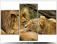 AFRIQUE - LION - TABLEAU IMPRIME MODERNE - DECO - NEW DESIGN