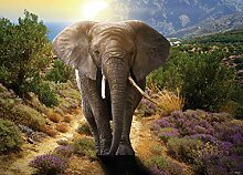 AG Design Elefant, Vlies Fototapete 1 Teil,