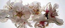 AG Design Fototapete FTNh2742 Photomurals Blumen