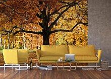 AG Design Fototapete FTNxxl2427, Baum