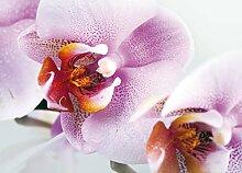 AG Design FTM 0489  Violette Orchidee, Papier