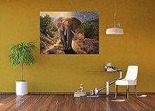 AG Design FTM 0865  Elefant Papier Fototapete,