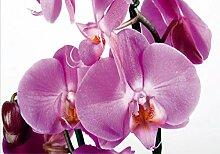 AG Design FTS 0049 Orchidee, Papier Fototapete -