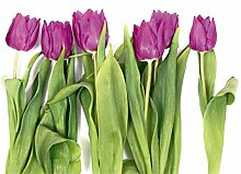 AG Design FTS 0065  Tulpen, Papier Fototapete -