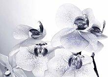 AG Design FTS 1306  Orchidee, Papier Fototapete -