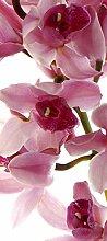 AG Design FTV 1514  Orchidee, Papier Fototapete -