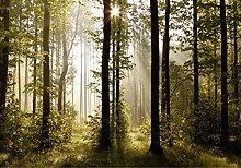 AG Design Morgen Wald, Vlies Fototapete, 4 Teile,