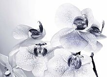 AG Design Orchidee, Vlies Fototapete, 4 Teile,