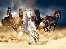 AG Design Pferderenne, Vlies Fototapete für