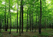 AG Design Wald, Vlies Fototapete, 4 Teile, Vlies,