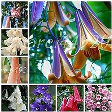 AGROBITS 100 PC/bag Bonsai Glockenblume Blume