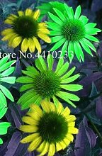 AGROBITS 100 PC mischte Echinacea Blumen Bonsai