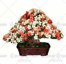 AGROBITS 100pcs Azalee Bonsai-Baum Rhododendron