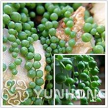 AGROBITS 100pcs / bag runde Perlen Chlorophytum