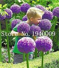AGROBITS 100pcs mischen Farbe Allium-Pflanzen Bio