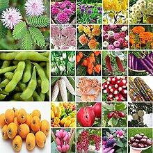 AGROBITS 15-100Pcs: Obst Gemüse Blumensamen