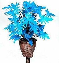 AGROBITS 200 PC/Beutel mischten Philodendron