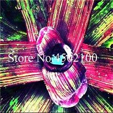AGROBITS 200 Stück Cactus Bromelie Bonsai,