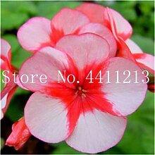AGROBITS 50 Stück Geranium plantas Perennial