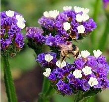 AGROBITS Blut Blume Bonsai Blume Blumen