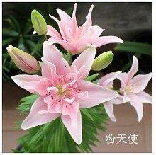 AGROBITS Calla-Lilien-Bonsai Topf Balkon Pflanze