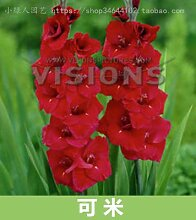 AGROBITS Farbe optional Gladiole Bonsai gepflanzt