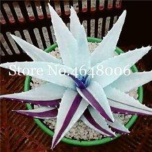 AGROBITS Saat: 120 Stück Aloe Vera Bonsai