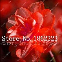 AGROBITS Saat: Bonsai 100 Stück Blühende